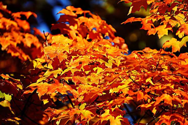 Fall Foliage Colors 16 Art Print