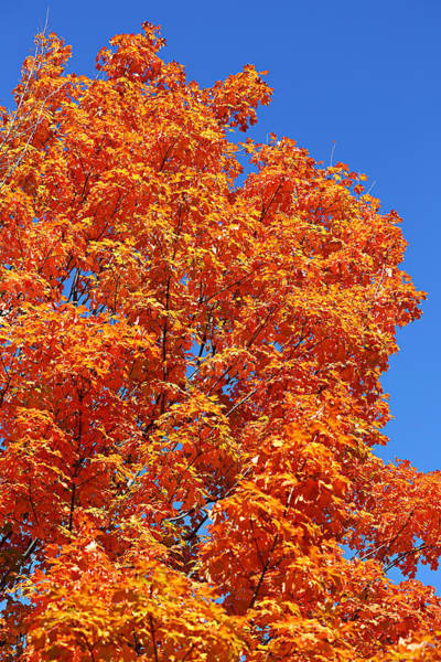 Photograph - Fall Foliage Colors 18 by Metro DC Photography