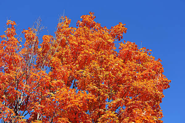 Photograph - Fall Foliage Colors 19 by Metro DC Photography