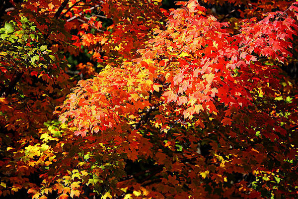 Photograph - Fall Foliage Colors 21 by Metro DC Photography