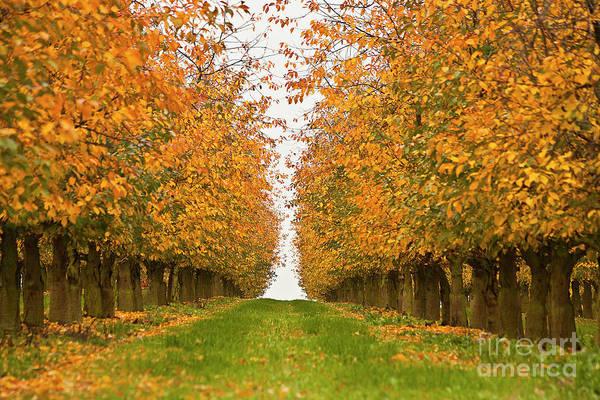 Photograph - Fall Foliage by Heiko Koehrer-Wagner