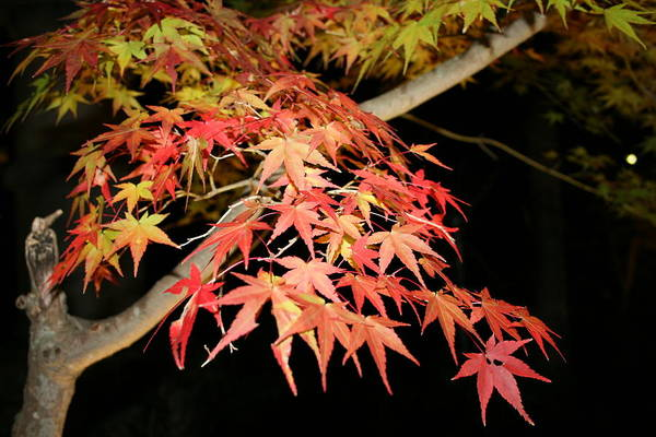 Photograph - Fall Foliage In Kyoto Japan by Angela Bushman
