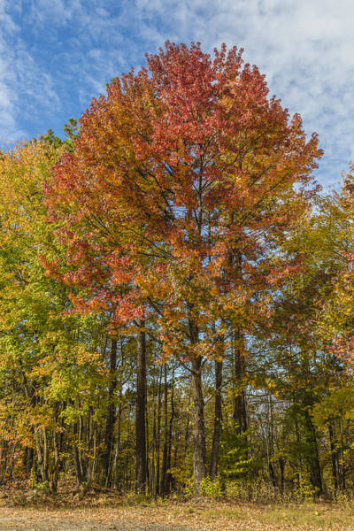 Photograph - Fall Foliage In The Ouachita National Forest by Steven Schwartzman