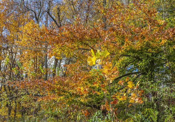 Photograph - Fall Foliage In The Ozarks by Steven Schwartzman