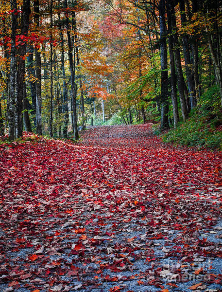 Photograph - Fall Foliage In Thetford Vermont by Edward Fielding