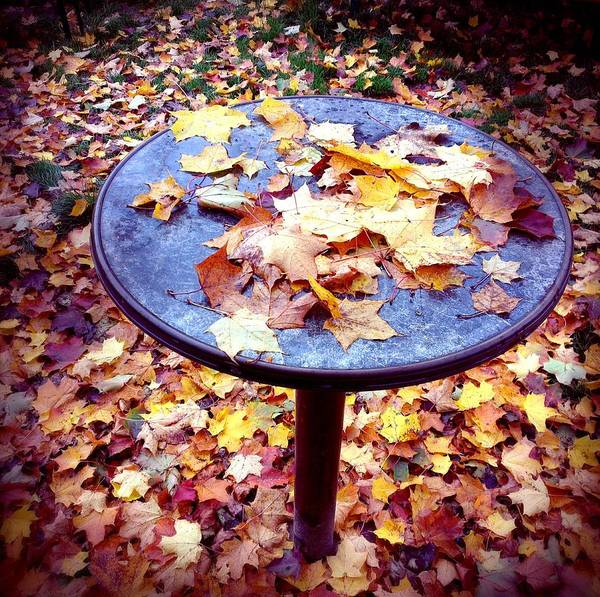 Brown Wall Art - Photograph - Fall Foliage On Table And Ground by Matthias Hauser