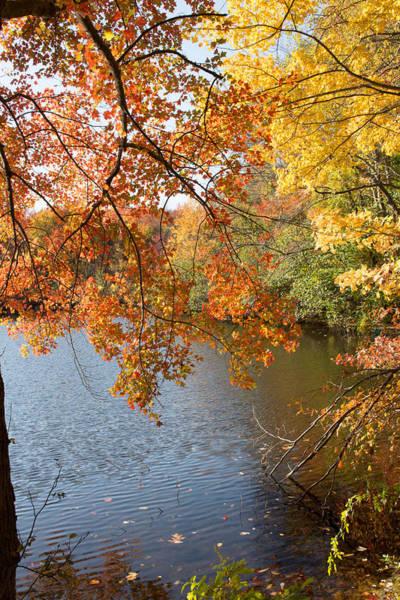 Photograph - Fall Foliage by Susan Jensen