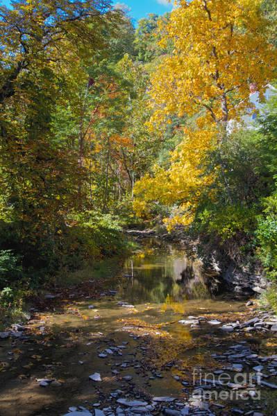 Bill Norton Wall Art - Photograph - Fall Foliage by William Norton