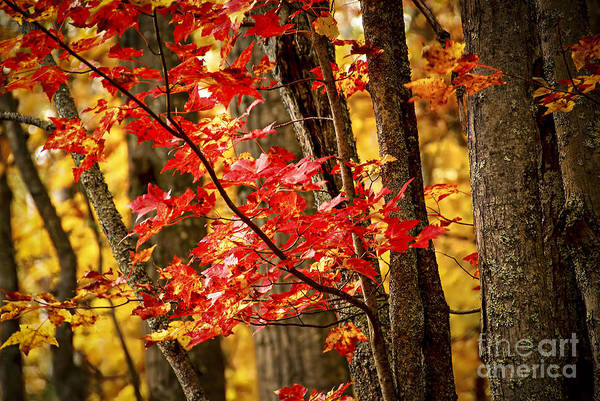 Photograph - Fall Forest Detail by Elena Elisseeva