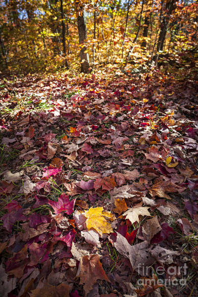 Photograph - Fall Forest Floor  by Elena Elisseeva