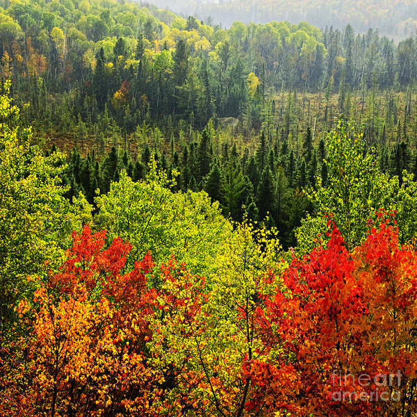Wall Art - Photograph - Fall Forest Rain Storm by Elena Elisseeva