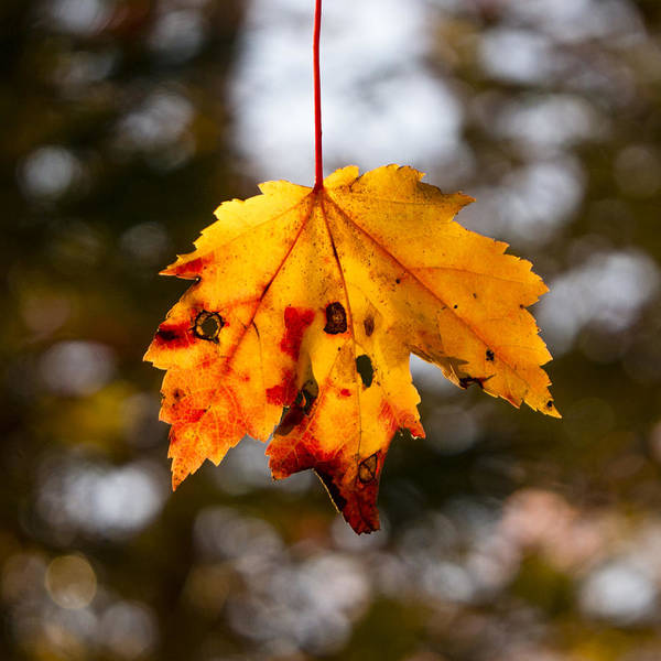 Photograph - Fall by Frank Winters
