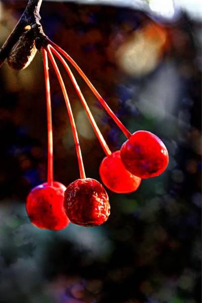 Photograph - Fall Fruit by David Matthews