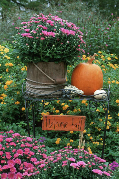 Bucket Photograph - Fall Garden Display, Mums In Wooden by Richard and Susan Day