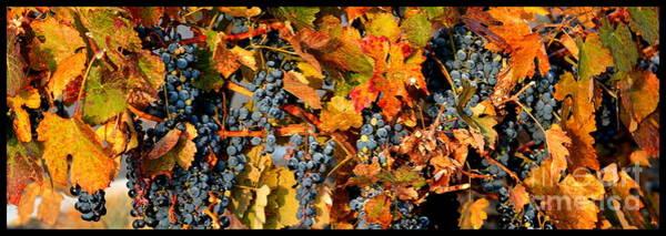 Wall Art - Photograph - Fall Grapes Dining Room Art by Carol Groenen