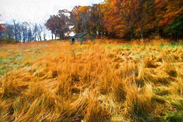 Photograph - Fall Grasses by Alice Gipson