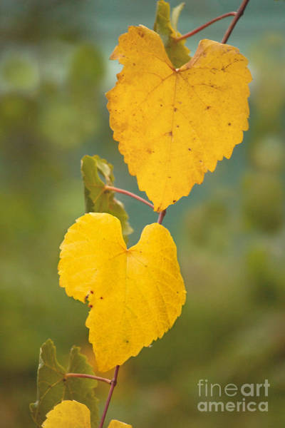 Photograph - Fall Hearts by Rima Biswas