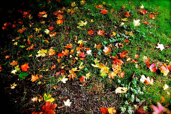 Photograph - Fall Imagery by HweeYen Ong