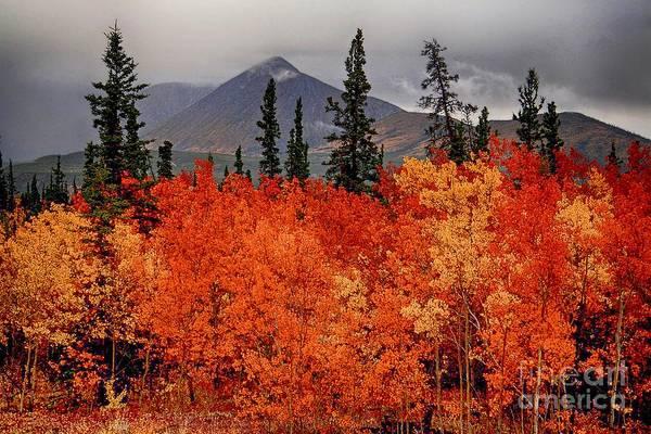 Photograph - Fall In Alaska by Karla Weber