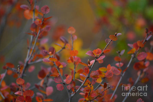 Photograph - Fall In Alaska by Kate Avery