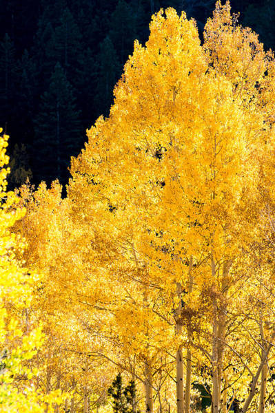 Photograph - Fall In Colorado by Colleen Coccia