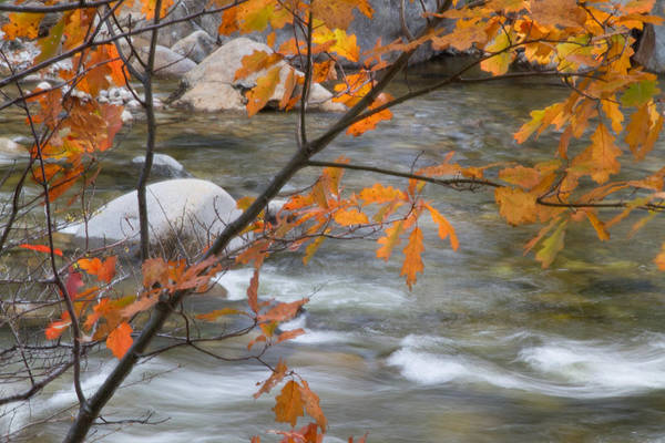 Photograph - Fall In Nh 1 by Natalie Rotman Cote