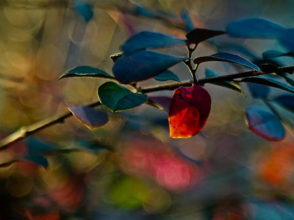 Bokeh Digital Art - Fall In Texas by Linda Unger