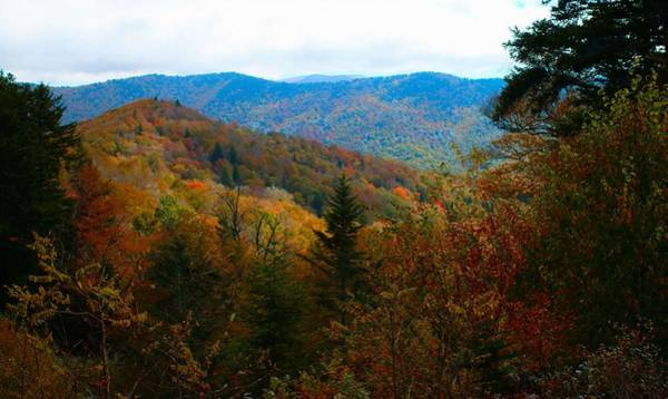Photograph - Fall In The Blue Ridge Mountains by Carol Montoya
