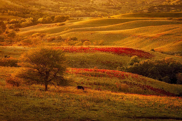 Midwest Photograph - Fall In The Flint Hills by Scott Bean
