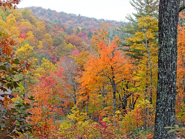 Photograph - Fall In The Woods by Duane McCullough
