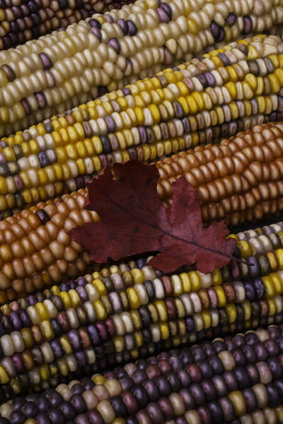 Indian Corn Photograph - Fall Indian Corn With Leaf by Garry Gay