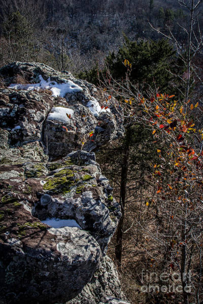 Photograph - Fall Into Winter by Jim McCain