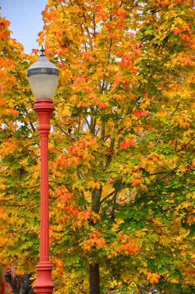 Photograph - Fall Lamppost by Kirt Tisdale
