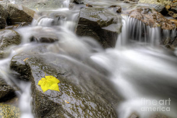Upper Peninsula Wall Art - Photograph - Fall Leaf In Stream by Twenty Two North Photography