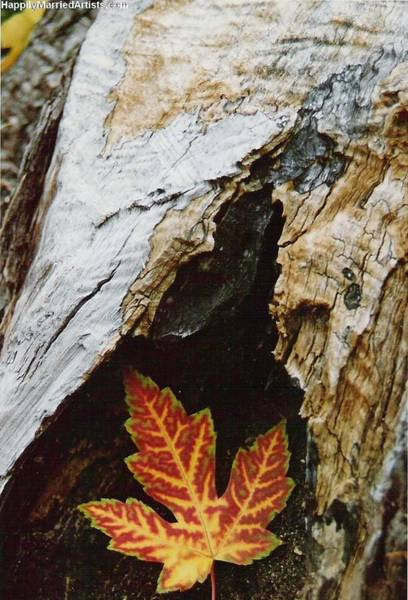 Photograph - Fall Leaf by Karin Thue