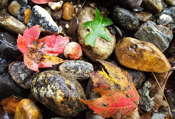 Photograph - Fall Leaves And River Rocks by Duane McCullough