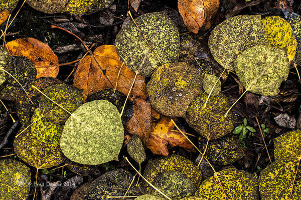 Photograph - Fall Leaves by Fred Denner