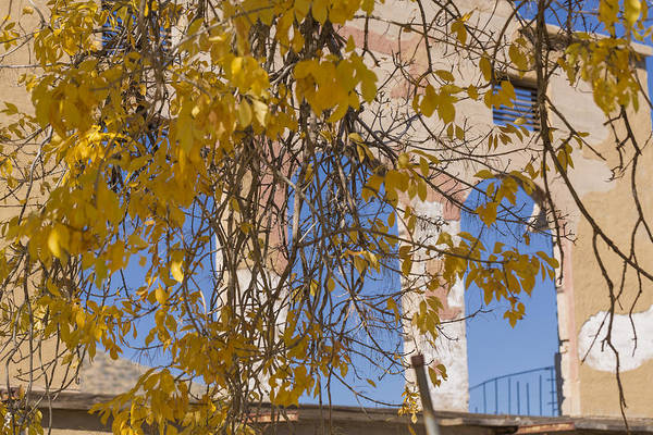 Photograph - Fall Leaves On Open Windows Jerome by Scott Campbell