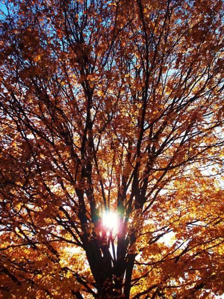 Fall Light Art Print