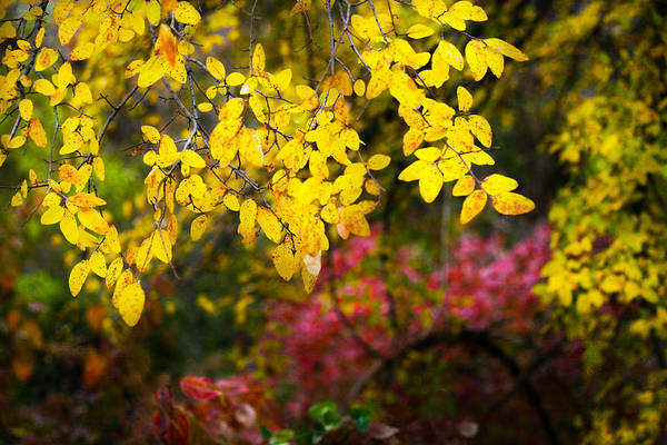Photograph - Fall Medley by Jeff Mize