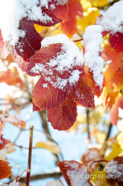 Photograph - Fall Meets Winter by Eddie Yerkish