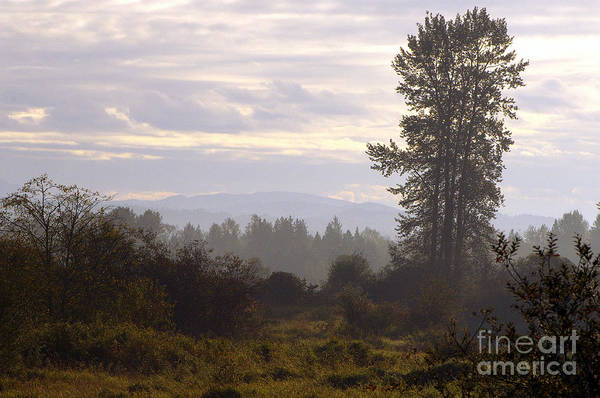 Alouette Wall Art - Photograph - Fall Morning 2 by Sharon Talson
