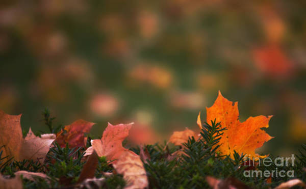 Photograph - Fall Mosaic by Rima Biswas