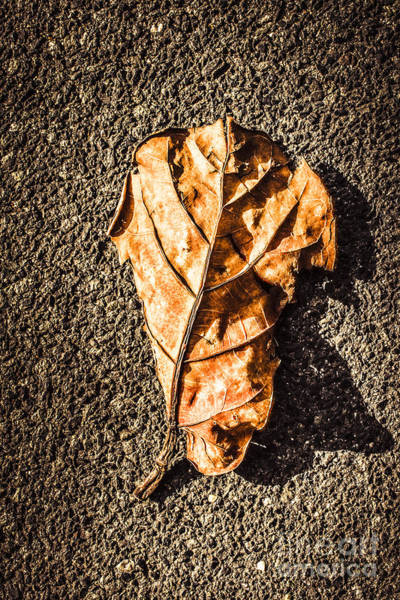Single Leaf Wall Art - Photograph - Fall Of Seasons by Jorgo Photography - Wall Art Gallery