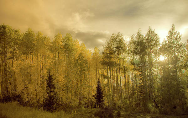 Grand Mesa National Forest Photograph - Fall On A Stormy Evening by Hlazyj - Susan Humphrey
