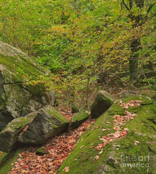 Photograph - Fall On The Rocks by Charles Kozierok