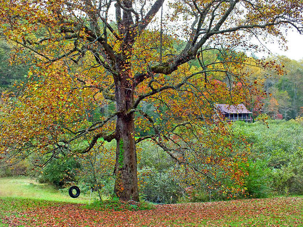 Photograph - Fall Poplar Tree In The Valley by Duane McCullough