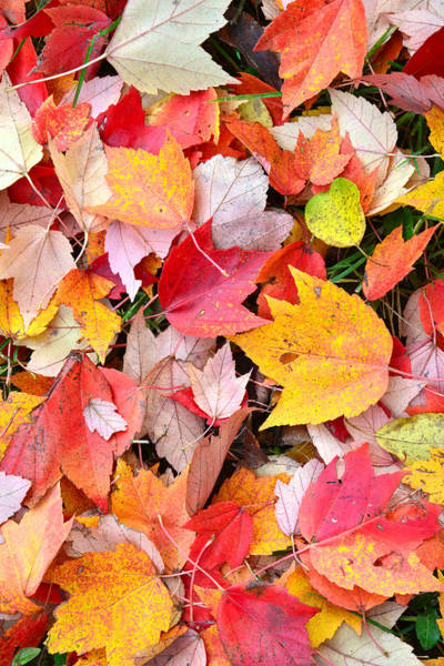 Photograph - Fall Potpourri by Ray Mathis
