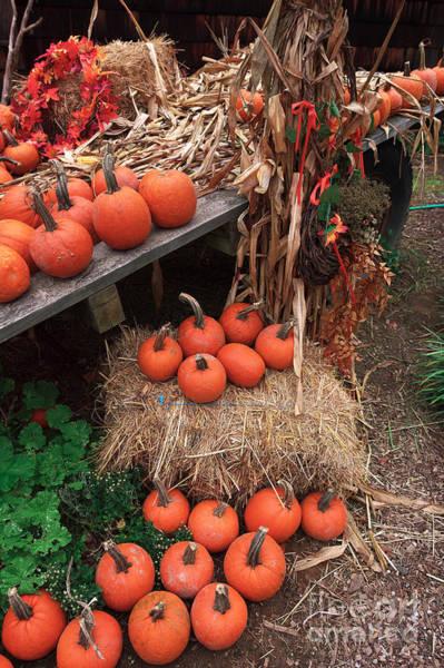 Photograph - Fall Pumpkins by John Rizzuto
