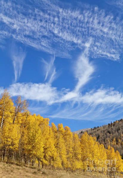 Photograph - Quaking Aspens In Fall by Yva Momatiuk John Eastcott